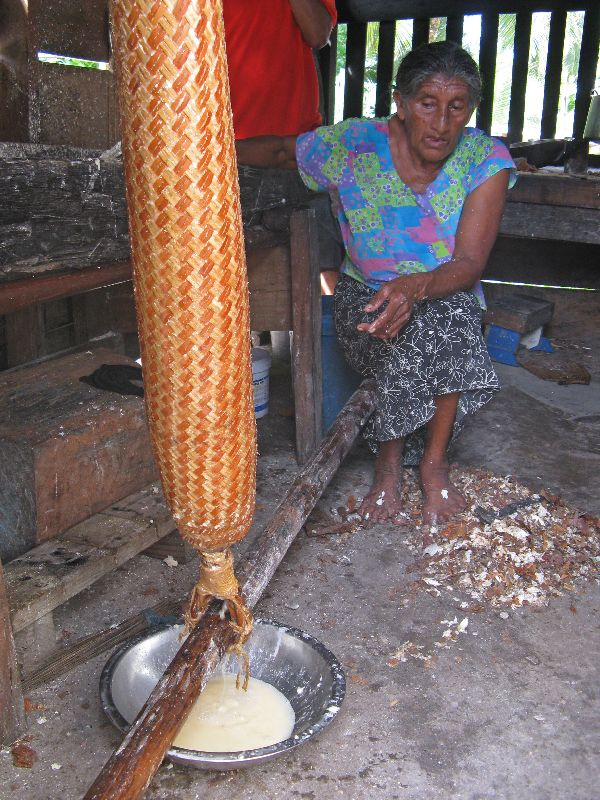 Squeezing casava in a matapi in preparation for making casava bread ...