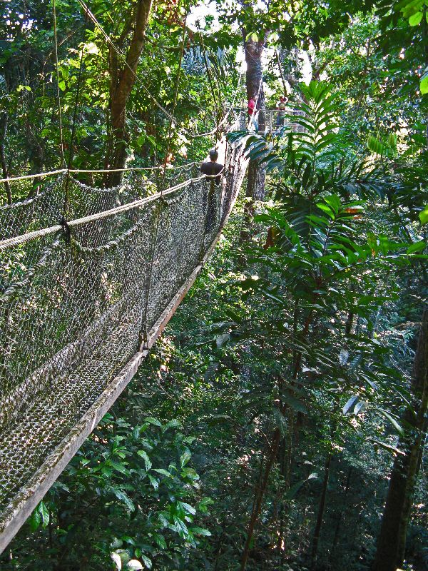 ... Canopy walk Iwokrama Forest Guyana & Guyana (Guiana): Iwokrama